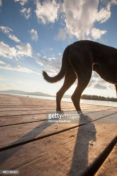 Dog standing on wooden dock
