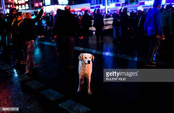 """Dog stands among supporters of the """"No"""" gesturing as they gather at the Kadikoy district in Istanbul on April 17, 2017 to protest following the..."""