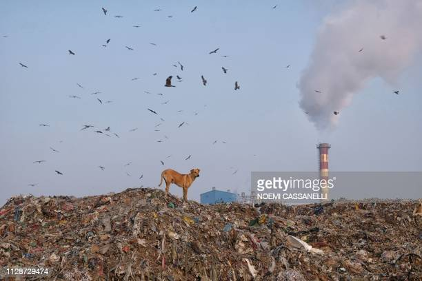 TOPSHOT A dog stands at the top of a mountain of garbage as birds fly overhead at the Ghazipur landfill site in New Delhi on March 5 2019