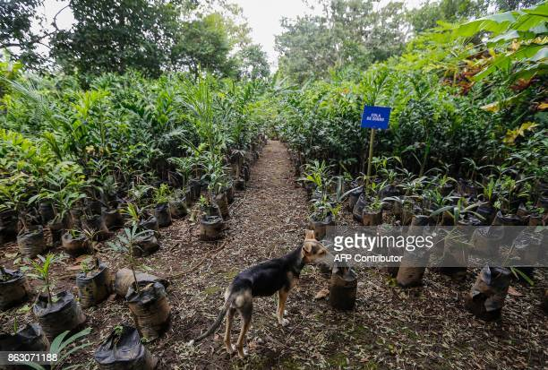 A dog stands guard at the 'San Dionisio' farm where they grew coffee and now grow fruit and ornamental trees due to the loss of land suitable for...