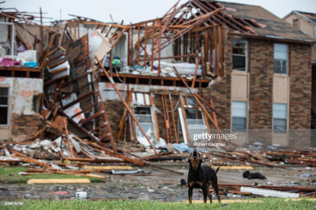 A dog stands guard over a section of the Saltgrass Estates apartments Saturday afternoon after Hurricane Harvey destroyed the complex.