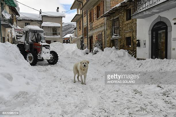 A dog stands in the snow on a central street of Aringo near Montereale after an earthquake struck the region on January 19 2017 / AFP / ANDREAS SOLARO