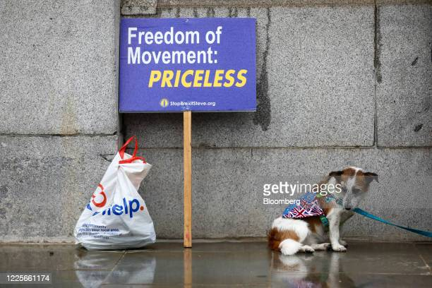 A dog stands near a placard reading Freedom of Movement Priceless during an antiBrexit protest outside the Houses of Parliament in London UK on...