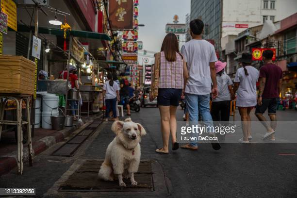 A dog stands next to a street food stall in Chinatown on May 17 2020 in Bangkok Thailand Thailand has allowed shopping malls restaurants and markets...