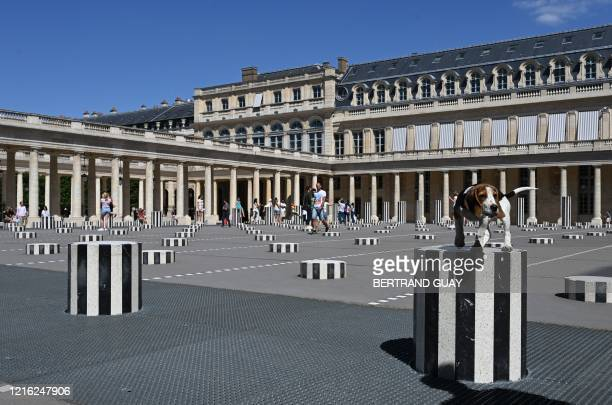 TOPSHOT A dog stands on a column of the 'Colonne de Buren' art installation at the Palais Royal in Paris on May 30 as France eases lockdown measures...
