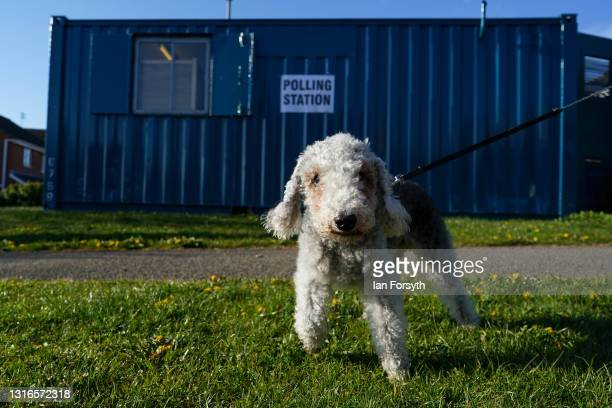 Dog stands outside a polling stations as voting begins for the Hartlepool by-election on May 06, 2021 in Hartlepool, England. Today voters in...