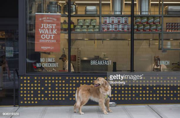 A dog stands outside the Amazon Go store in Seattle Washington US on Wednesday Jan 17 2018 After more than a year of testing with an employeeonly...