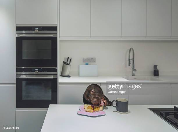 dog stealing toast from the side..! - misbehaviour stock pictures, royalty-free photos & images
