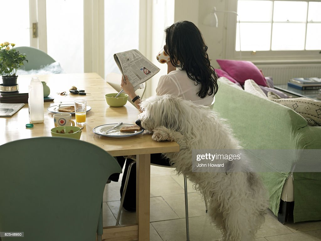 Dog stealing woman's toast : Stock Photo
