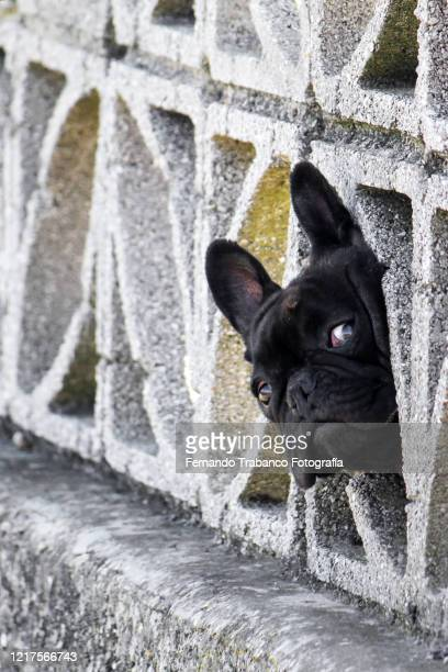 dog sticking head out of a hole - trapped stock pictures, royalty-free photos & images