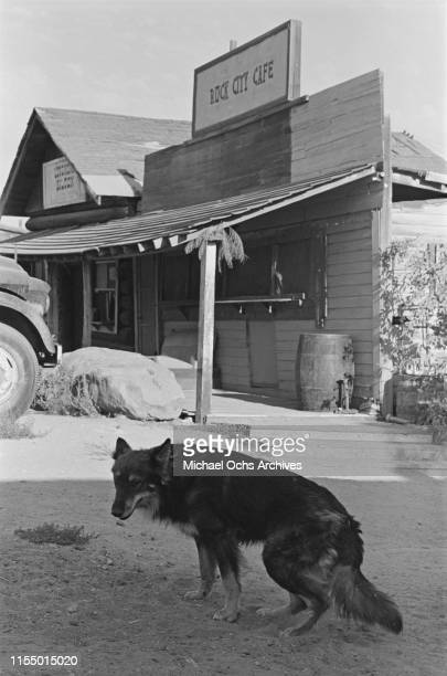 A dog strolling around the Spahn Movie Ranch owned by American rancher George Spahn and residence of the Manson Family Los Angeles County California...