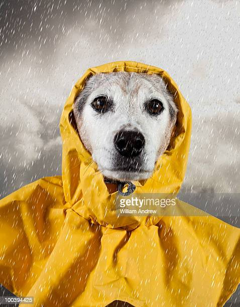Dog stuck in rain storm