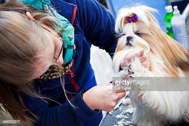 dog stylist - lhasa apso stock photos and pictures