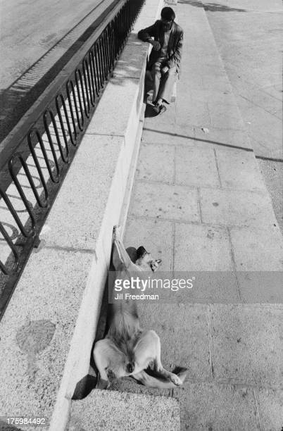 A dog sunning itself in the street in El Pardo Madrid Spain 1975