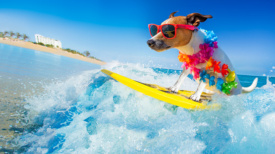 dog surfing on a wave 912592258