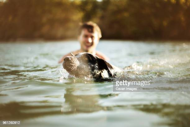 Dog swimming by man in river