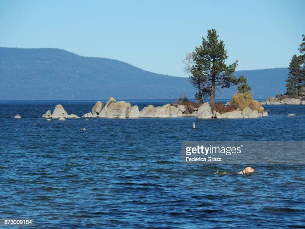dog swimming in lake tahoe, ca & nv - us state border stock photos and pictures