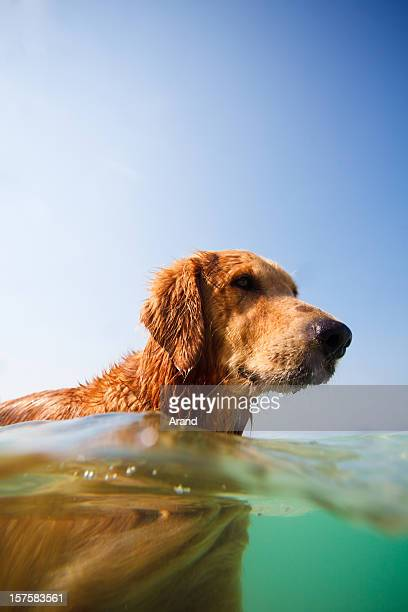 dog swimming in sea