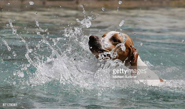 A dog swims in a fountain prior to the start of the 62nd Cannes Film Festival on May 12 2009 in Cannes France