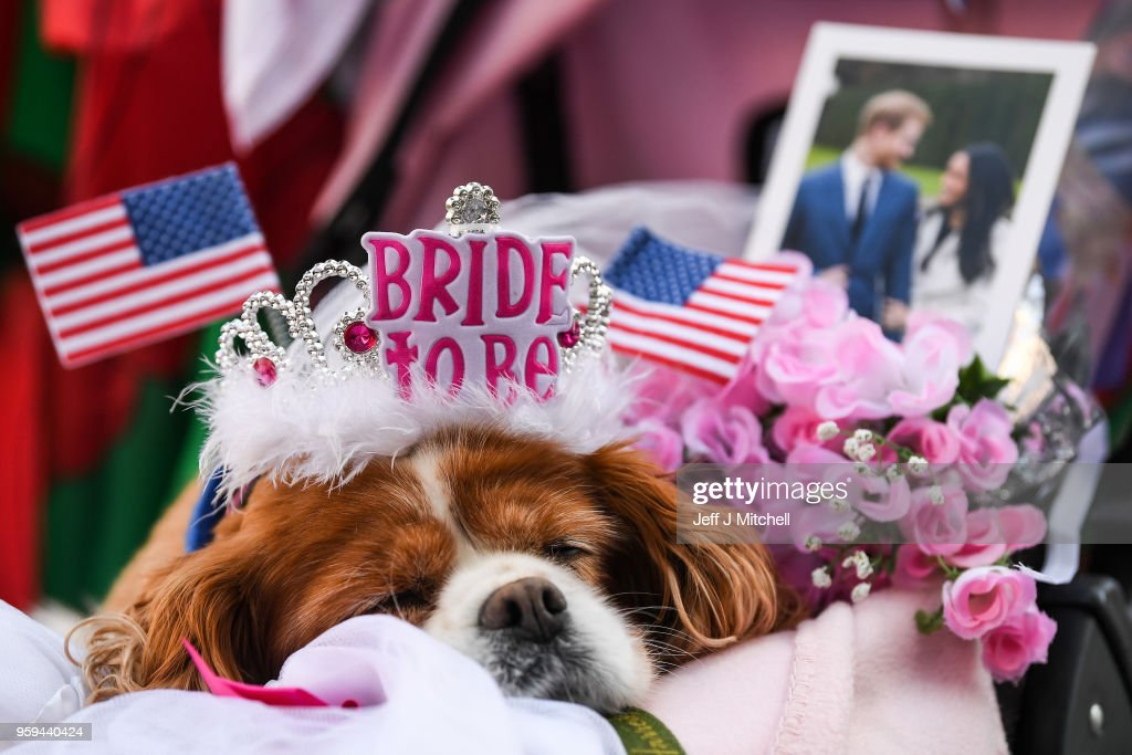 A dog takes a nap before the rehearsal of the carriage procession for the wedding of Prince Harry and Meghan Markle on May 17, 2018 in Windsor, England. More than two hundred members of the armed forces will be taking part in the rehearsal along with the wedding carriage through Windsor.