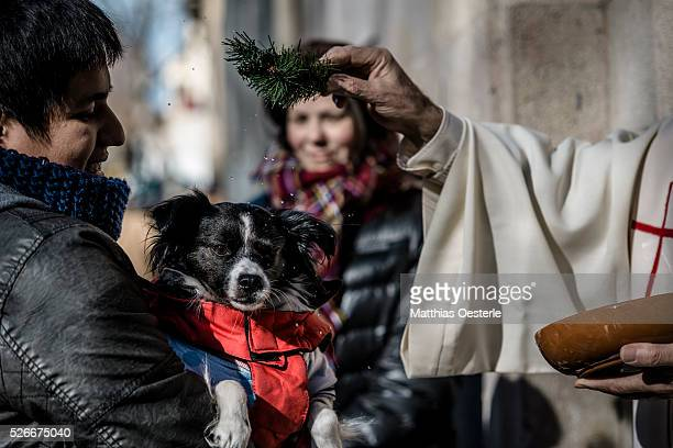 A dog takes part in the annual Blessing of the Animals event at Escola Pia Sant Antoni in Barcelona at feast day of San Anton the patron saint of...