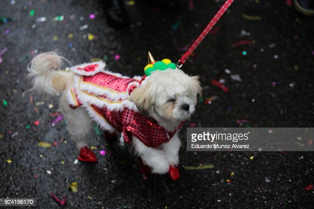 A dog takes part in the Chinese Lunar New Year parade in Chinatown on February 25 2018 in New York City The Chinese New Year parade is one of the...
