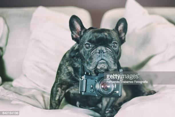 Dog taking a photo
