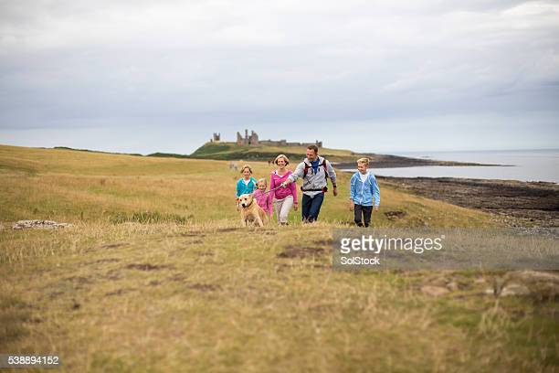 dog taking its owners for a walk - northumberland stock photos and pictures