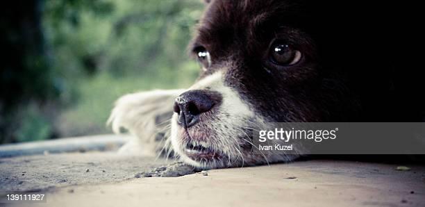 Dog taking rest
