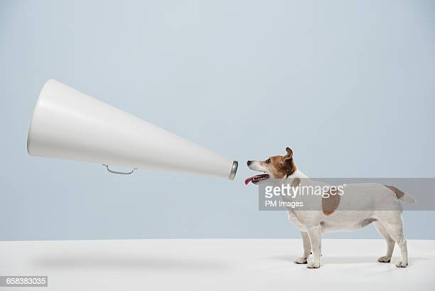 Dog talking into Megaphone
