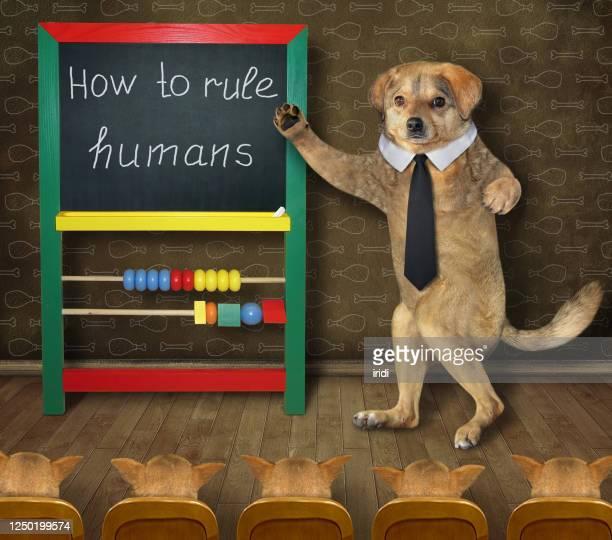 beige dog teacher black tie is