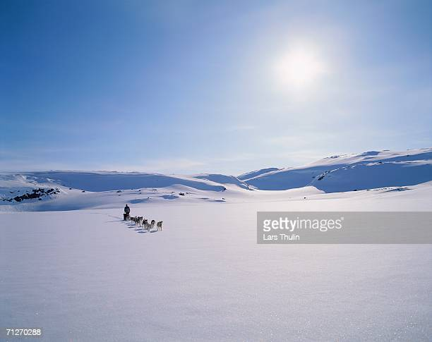 a dog team in a winter landscape. - swedish lapland stock photos and pictures