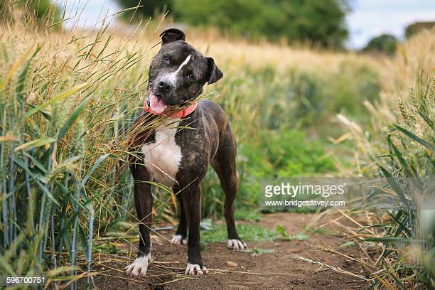 Dog tilting his head in a field