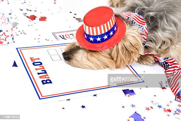 Dog Tired After Elections