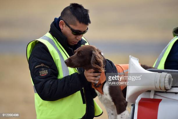 A dog trained by personnel of the Fumigation and Avian Control is being released to scare birds at Benito Juarez International Airport in Mexico City...