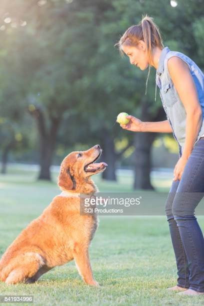Dog trainer works with dog in a park