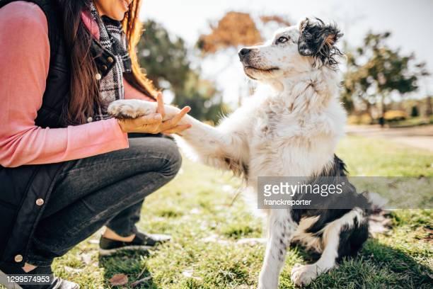 公園での犬のトレーニングセッション - 動物調教師 ストックフォトと画像