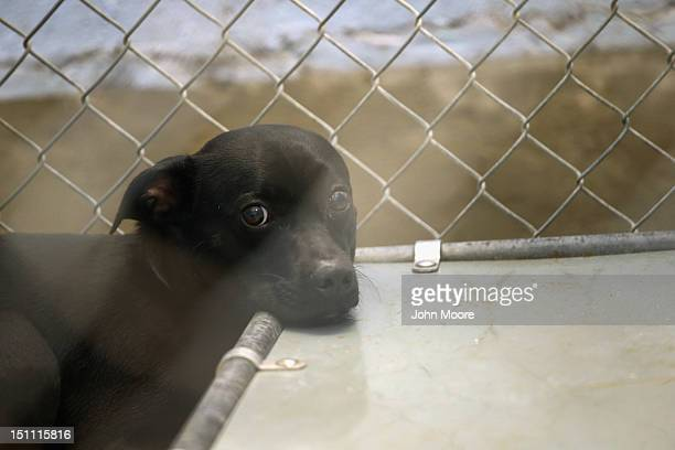 Dog, traumatized when its owner's house was flooded due to Hurricane Isaac, awaits transport from the Jefferson Parish Animal Shelter on September 1,...