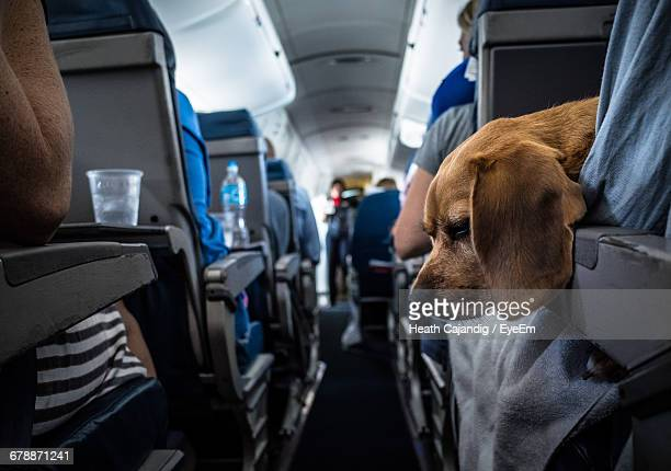Dog Travelling With People In Bus