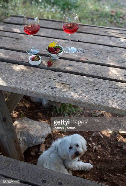 Dog under wooden table