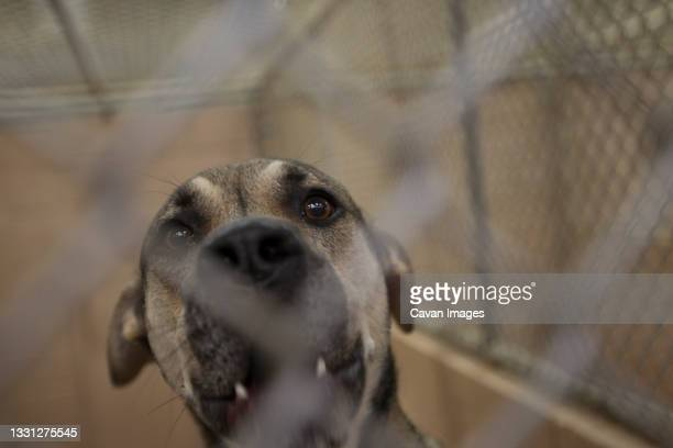 a dog up for adoption at an animal center in atlanta, georgia - dog pound stock pictures, royalty-free photos & images
