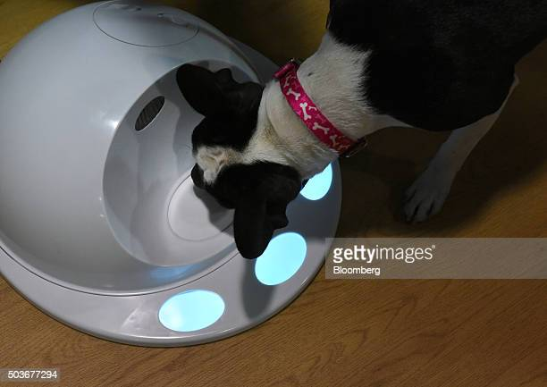 A dog uses the CleverPet Hub game console during the 2016 Consumer Electronics Show in Las Vegas Nevada US on Wednesday Jan 6 2016 CES is expected to...