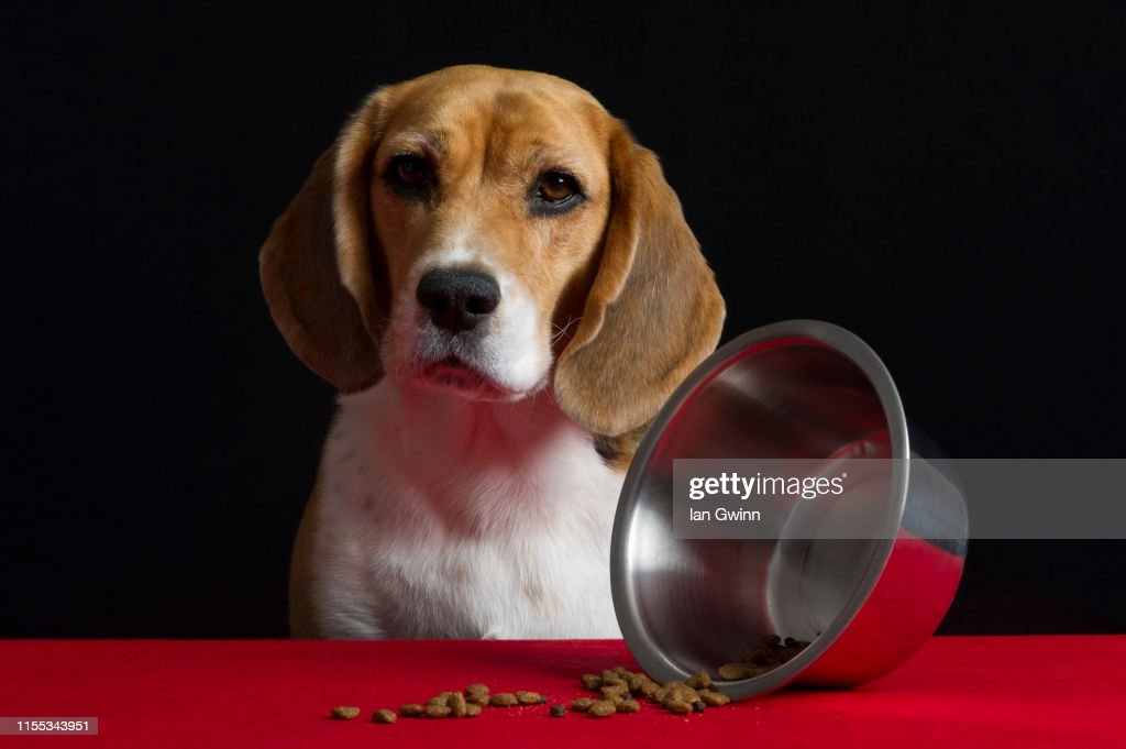 Dog Vanitas - Dog Bowl Turned Over : Stock Photo