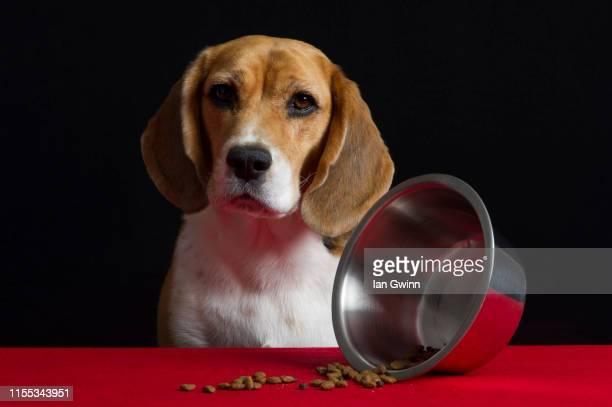 dog vanitas - dog bowl turned over - ian gwinn stock-fotos und bilder