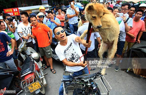 Dog vendor lifts up a dog in protesting against the animal rights activists on June 20, 2014 in Yulin, China. An annual Chinese dog meat festival...
