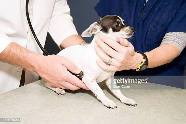 Dog Veterinary Exam