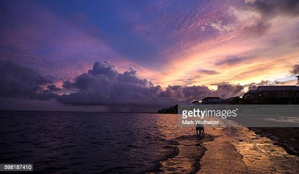 A dog wades through the shallow water prior to the arrival of tropical storm Hermine at Shell Point Beach August 31 2016 near Crawfordville Florida...