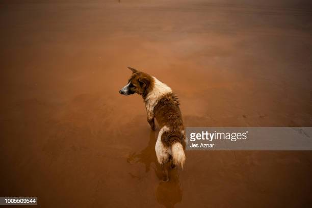A dog wades through thick mud after flash floods engulfed villages the other night on July 26 2018 in Attepeu southeastern Laos At least 26 people...