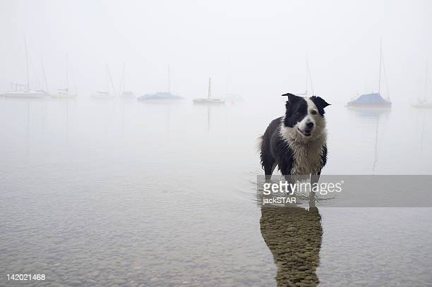 Dog wading in still lake