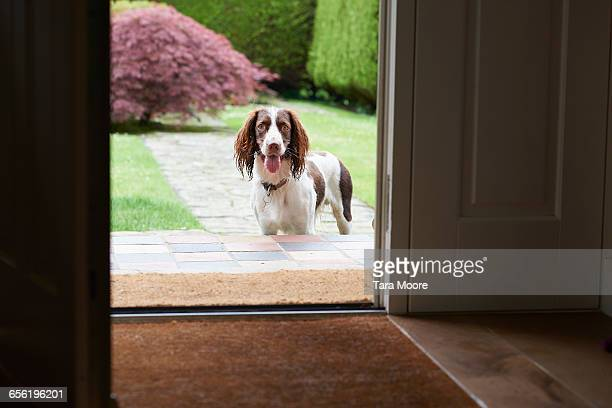 dog waiting at door of house